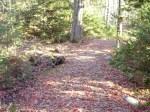 Graves Island path