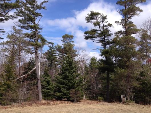 View from Point Pleasant Park Pavilion