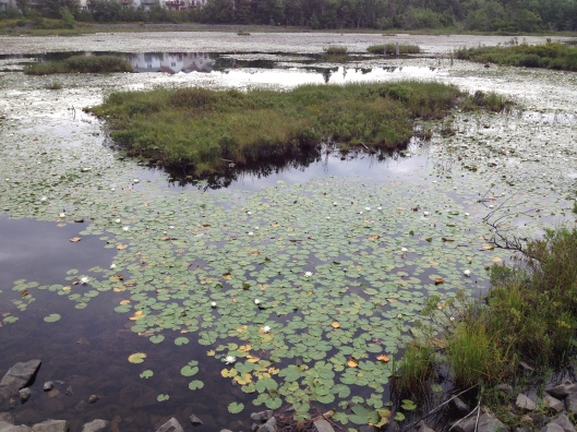 Belcher's Marsh
