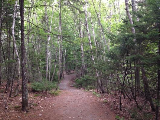 Belcher's Marsh trail