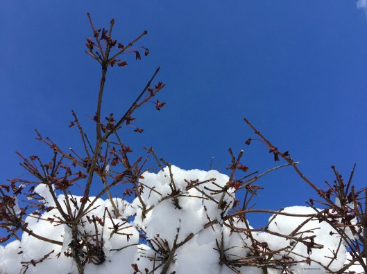 Blue sky and snow