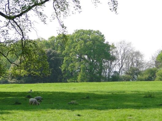 Hidcote Bartrim