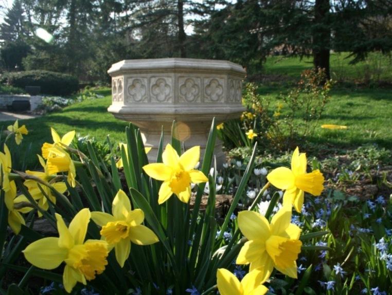 Daffodils, scilla, and bloodroot