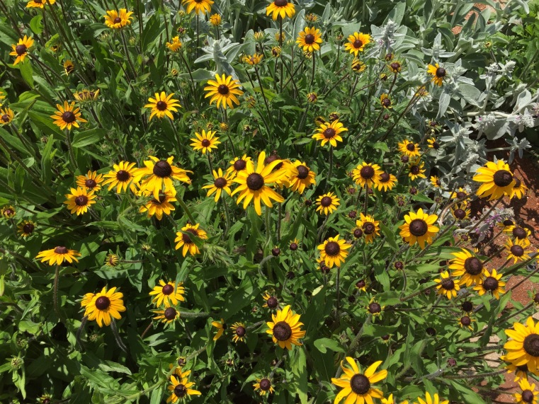 Flowers at the Carol Shields Memorial Labyrinth