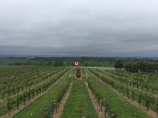 Luckett Vineyards, Gaspereau Valley, Nova Scotia