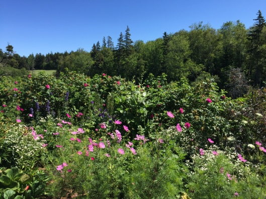 The garden at Green Gables