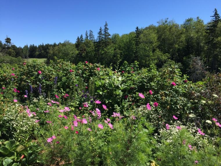 The garden at Green Gables