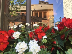 Window box at The Old Triangle