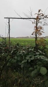 Field near Bonn