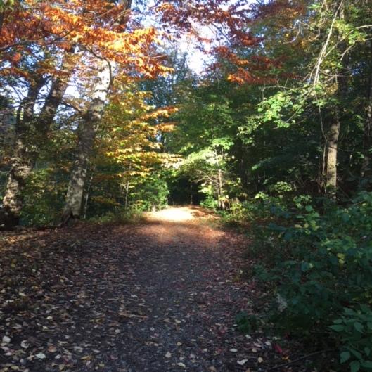 Fall in Olmsted Park, Brookline, Massachusetts
