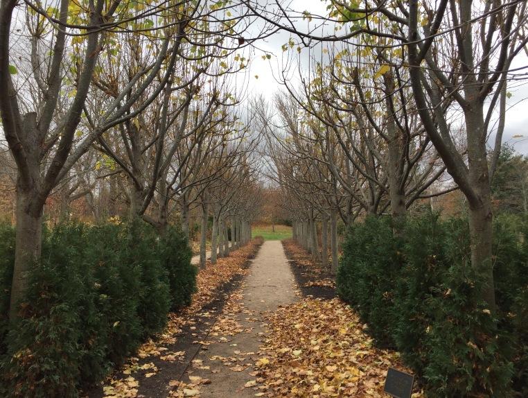 Lime walk, Harriet Irving Botanical Garden, Wolfville, Nova Scotia